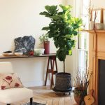 How to Display Houseplants, Displaying Houseplants, Gardening, Indoor Gardening, Decorating With Houseplants, How to Decorate With Houseplants, Indoor Gardening Tips, Houseplant Care TIps
