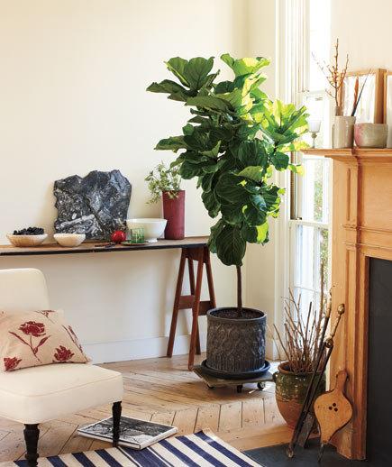 How to Display Houseplants, Displaying Houseplants, Gardening, Indoor Gardening, Decorating With Houseplants, How to Decorate With Houseplants, Indoor Gardening Tips, Houseplant Care TIps