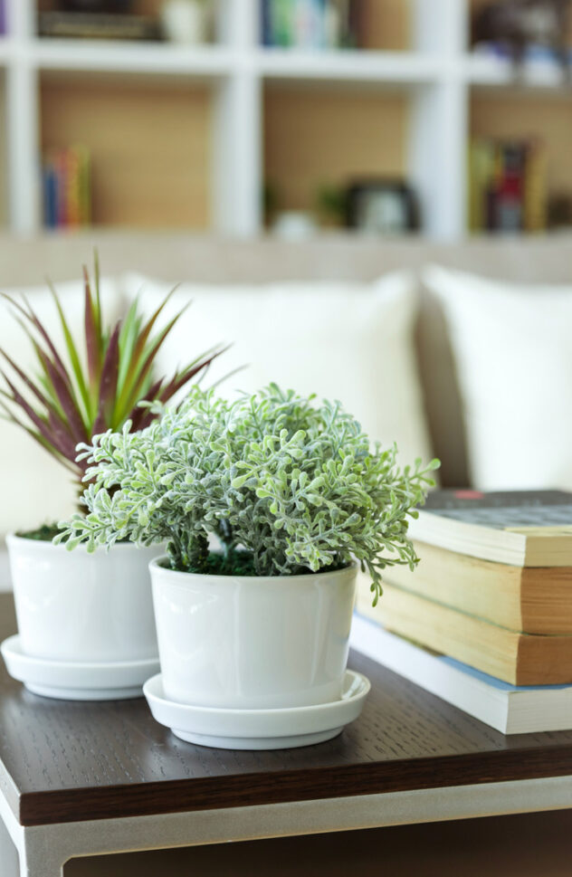 Home upgrades on a budget are possible! Adding houseplants to your home is an instant upgrade!