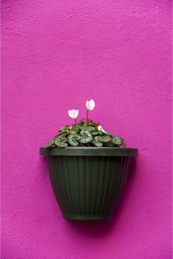 galvanized painted wall planter
