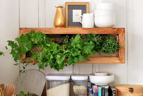 30 Fixer Upper DIY Indoor Wall-Planters for Growing Year-Round - Pickled Barrel