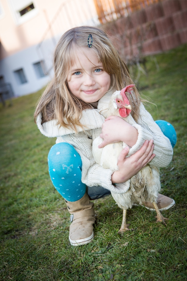 Raising Backyard Chickens | backyard chickens | raising chickens | rustic life | chickens | country living