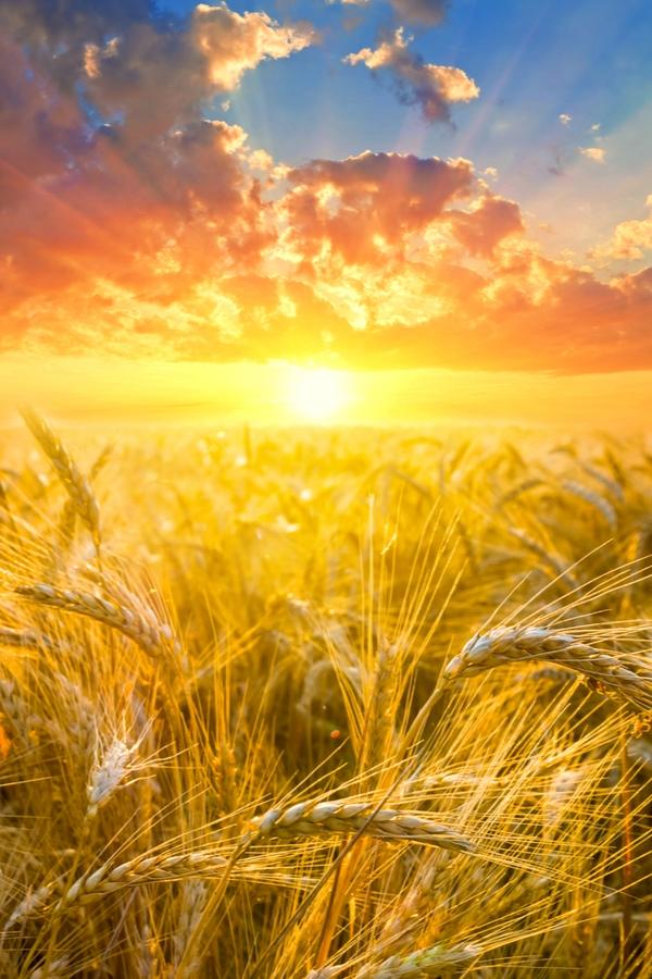 Benefits of Rural Living