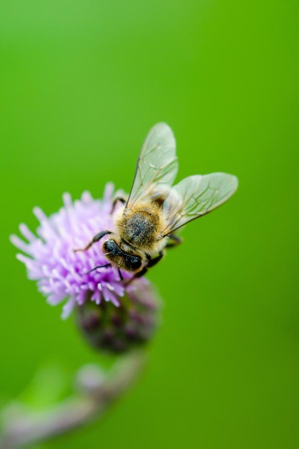 Benefits of keeping bees   beekeeping   DIY   keeping bees   rustic life   bees